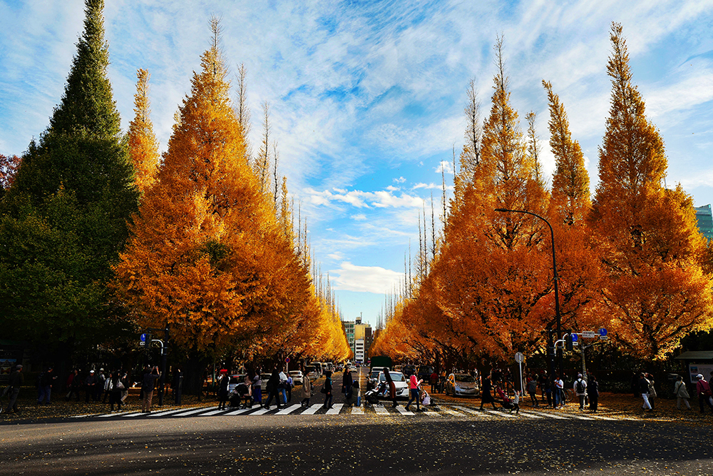 Street lined with Gingko trees at Meiji Jingu Gaien.